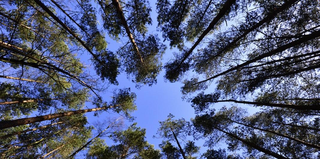 Jak daleko se může datovat uhlík